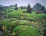 Tasmanien, Cushion Plants